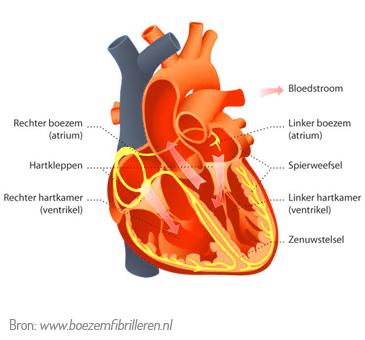 afbeelding hart
